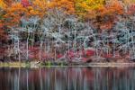 Sag Harbor Autumn Pond
