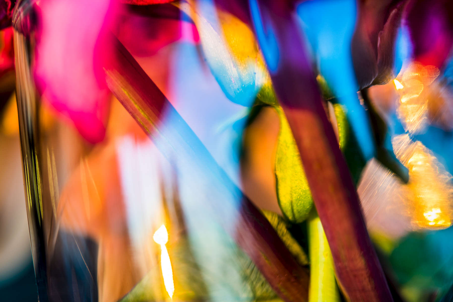 Flower Sunset Abstract 1