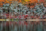 Sag Harbor Autumn Pond