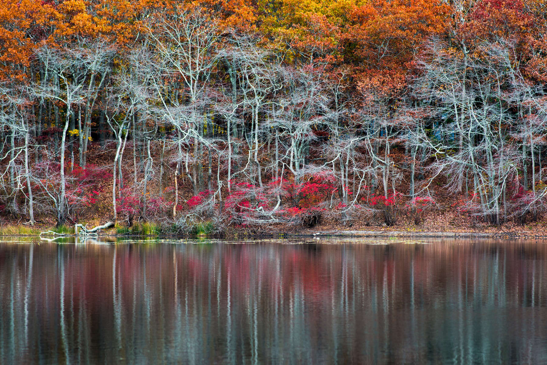 johnmazlish-fineart-sagharbor-autumnpond-reflection-nature
