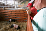 Visitors admire piglets at the 53rd agricultural fair Agra in Gornja Radgona, Slovenia, Aug. 22, 2015.