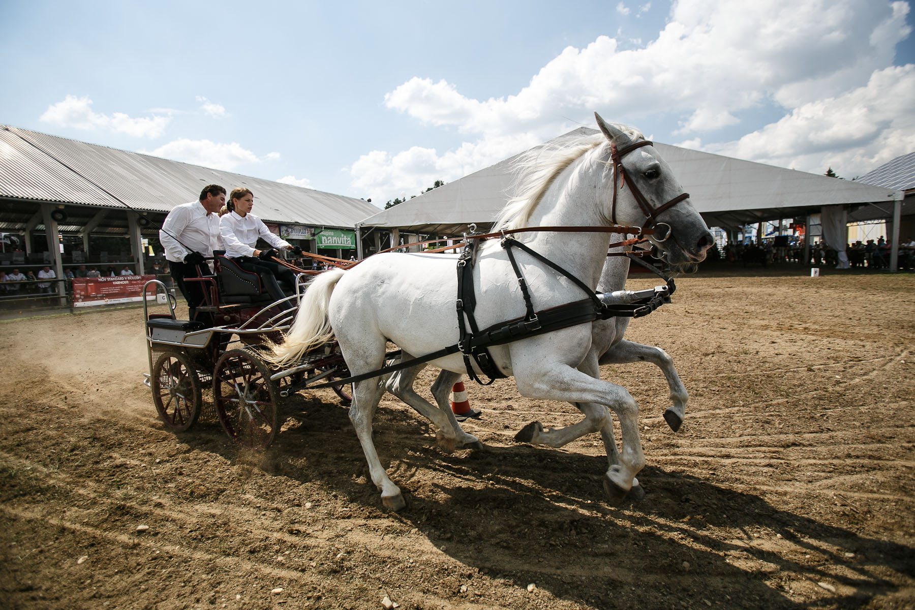 A carriage is pulled by lipizzaner horses during the lipizzaner horse presentation show at the 53rd agricultural fair Agra in Gornja Radgona, Slovenia, Aug. 22, 2015.