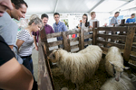 Visitors admire sheep at the 53rd agricultural fair Agra in Gornja Radgona, Slovenia, Aug. 22, 2015.
