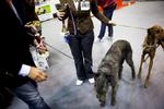 DogShows-photoLukaDakskobler-11