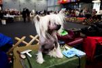 DogShows-photoLukaDakskobler-12