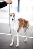 DogShows-photoLukaDakskobler-13