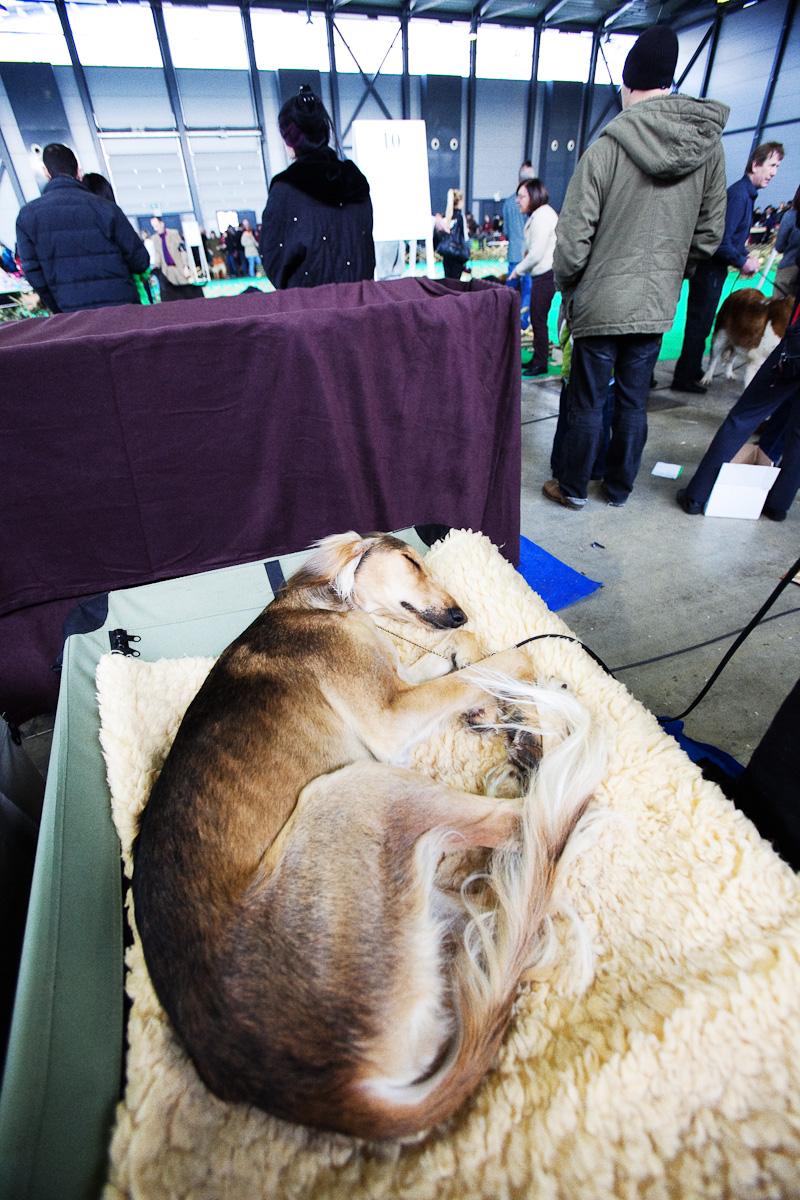 DogShows-photoLukaDakskobler-14
