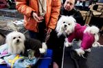 DogShows-photoLukaDakskobler-15