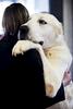 DogShows-photoLukaDakskobler-16