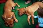 DogShows-photoLukaDakskobler-19