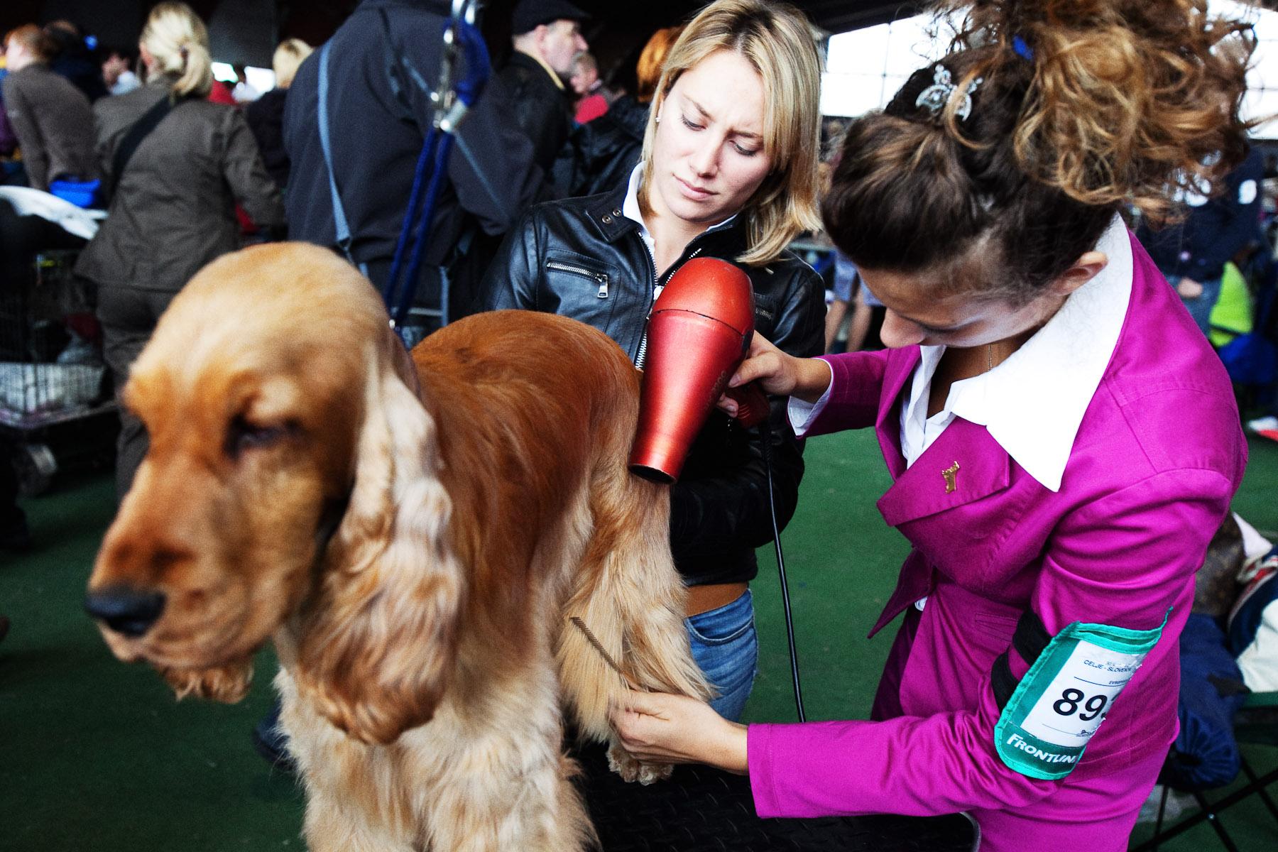 DogShows-photoLukaDakskobler-21