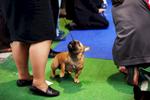 DogShows-photoLukaDakskobler-23