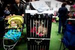 DogShows-photoLukaDakskobler-24