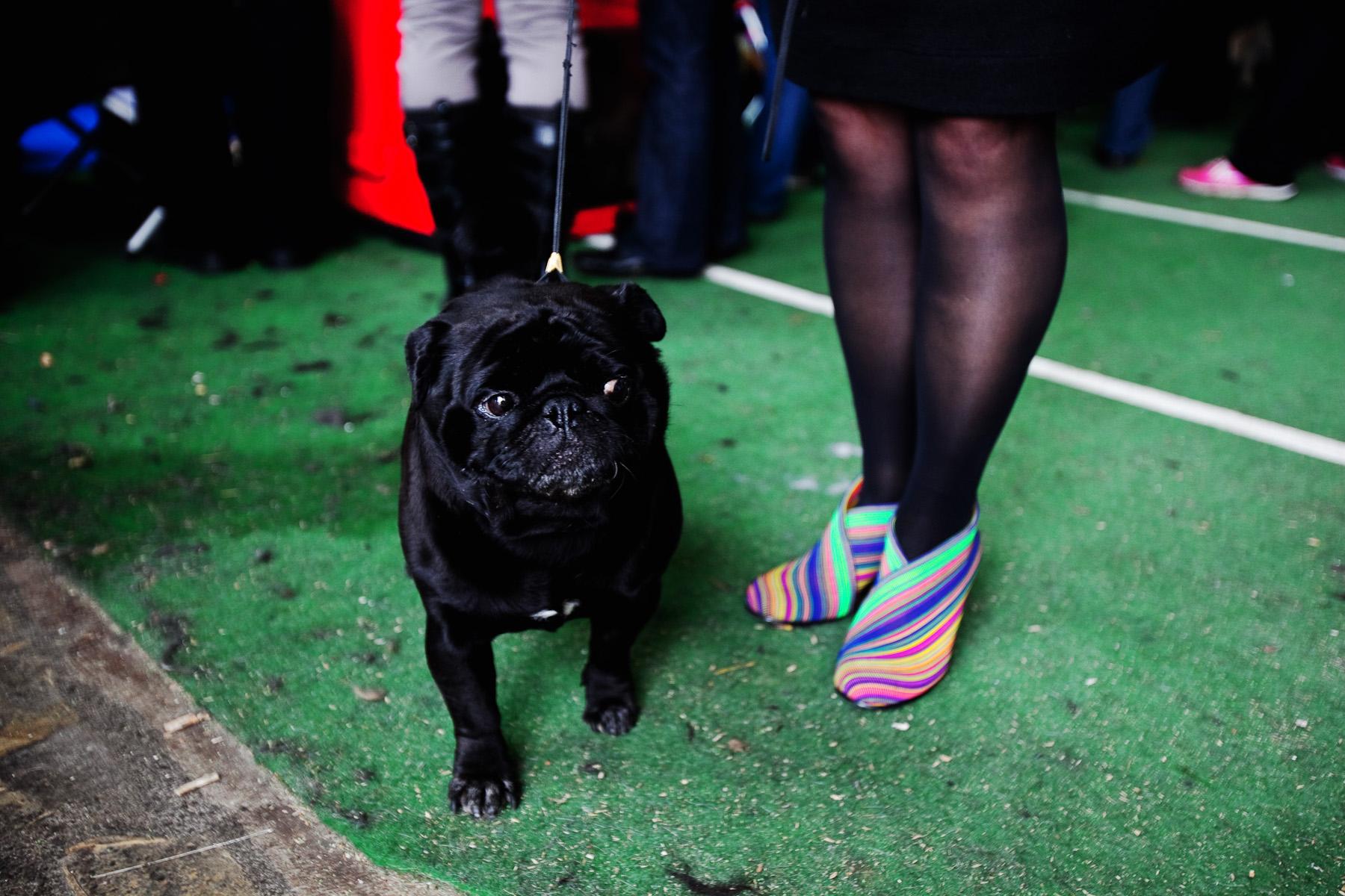 DogShows-photoLukaDakskobler-25