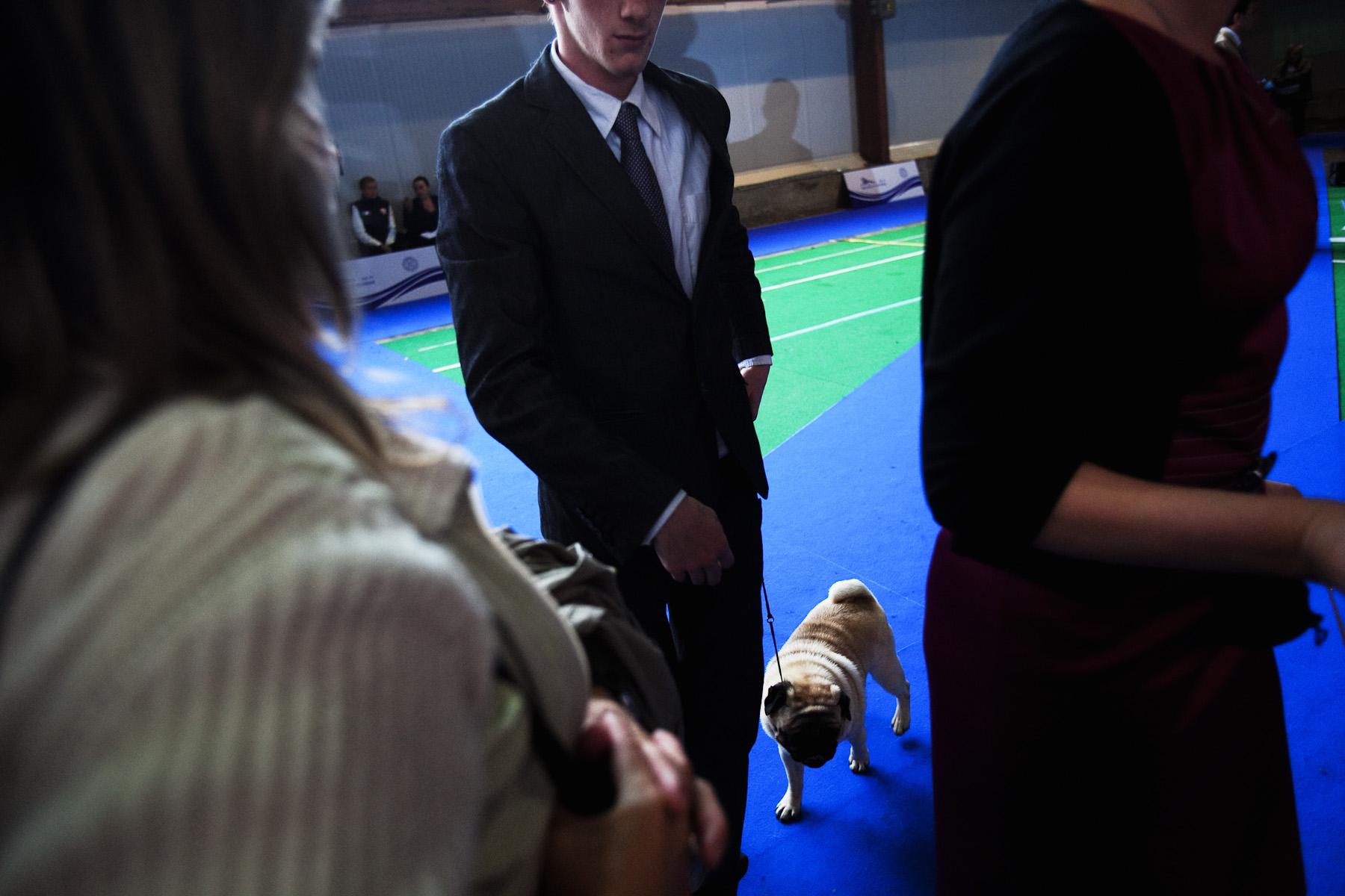 DogShows-photoLukaDakskobler-26