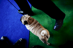 DogShows-photoLukaDakskobler-27