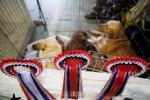 DogShows-photoLukaDakskobler-32