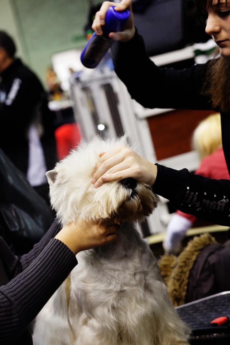DogShows-photoLukaDakskobler-4