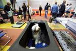 DogShows-photoLukaDakskobler-5