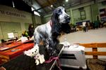 DogShows-photoLukaDakskobler-6