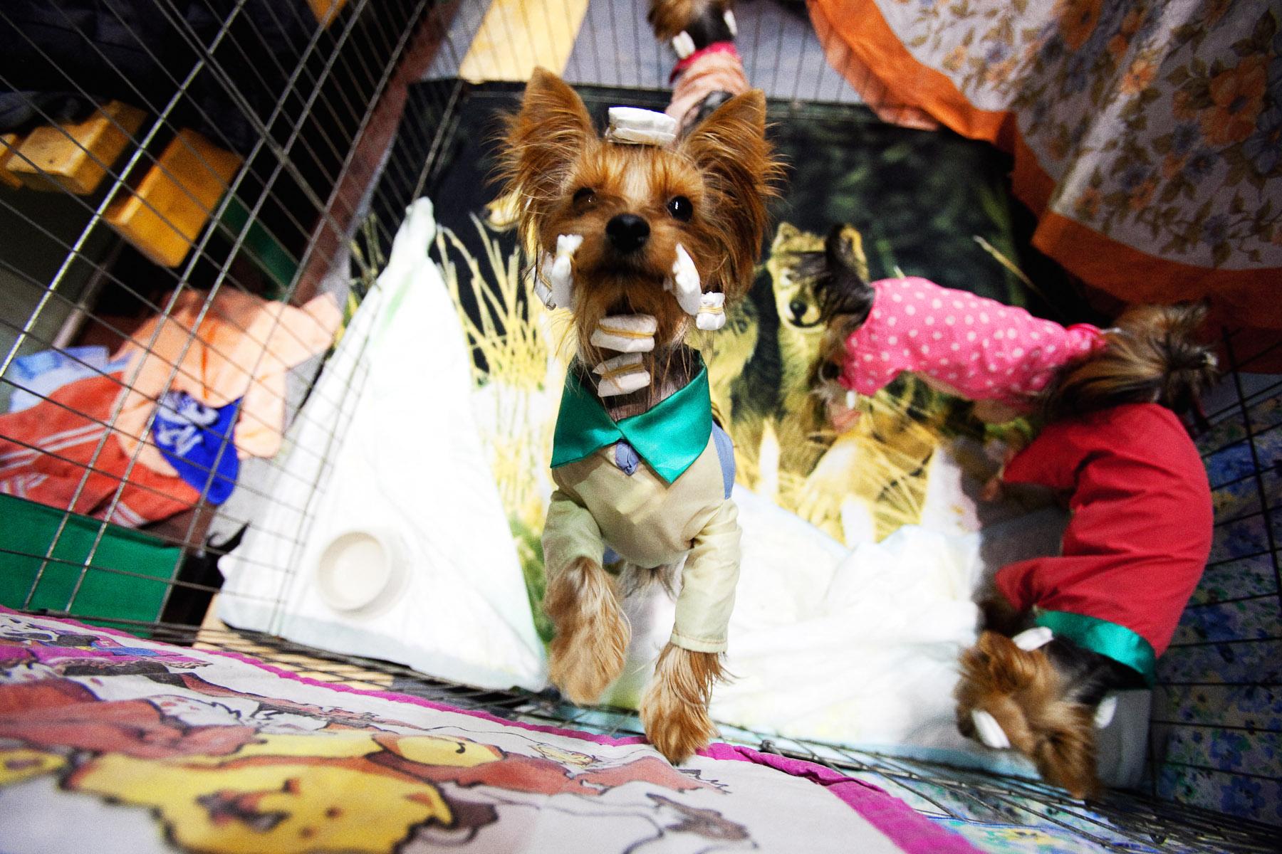 DogShows-photoLukaDakskobler-7