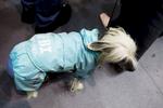 DogShows-photoLukaDakskobler-8