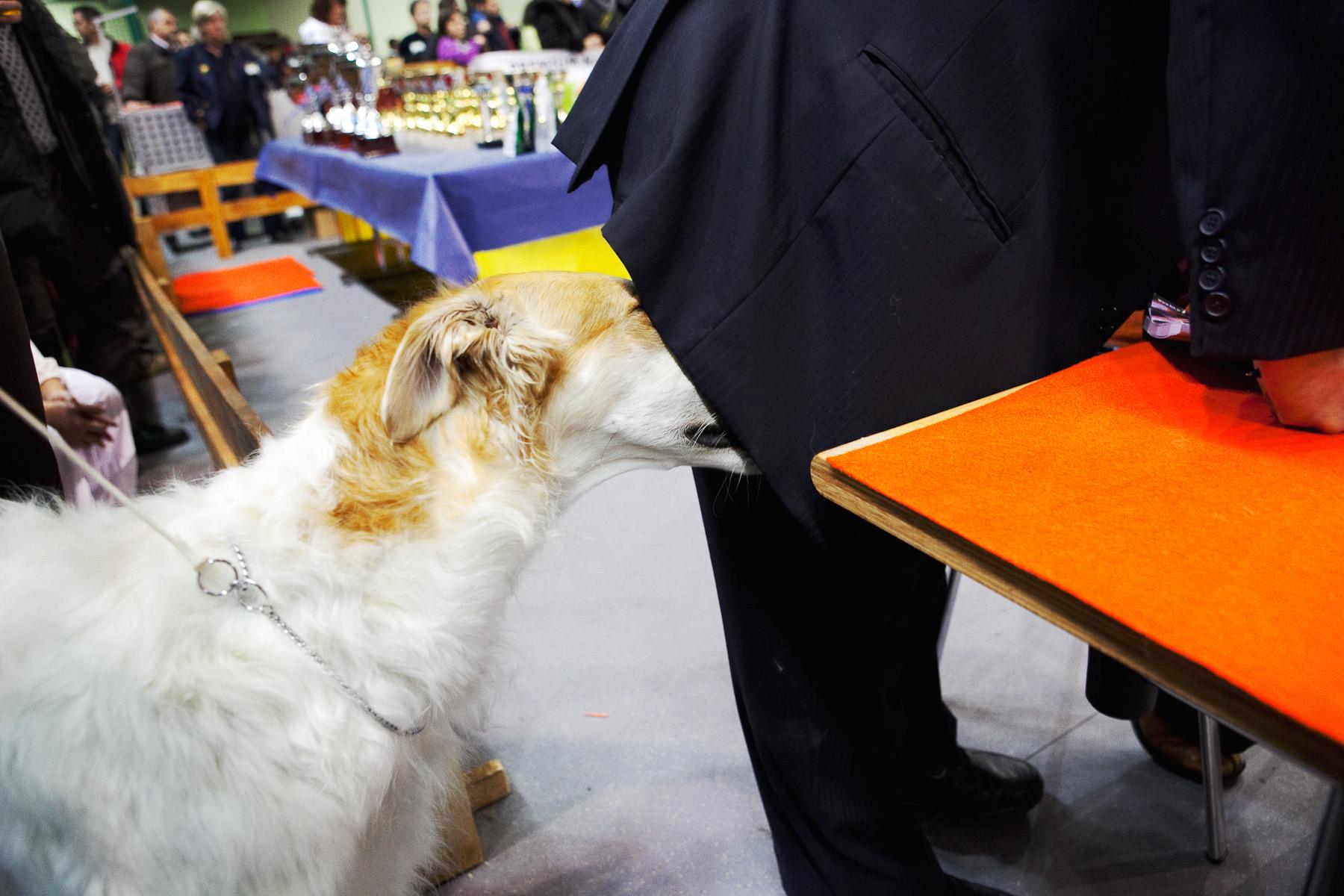 DogShows-photoLukaDakskobler-9