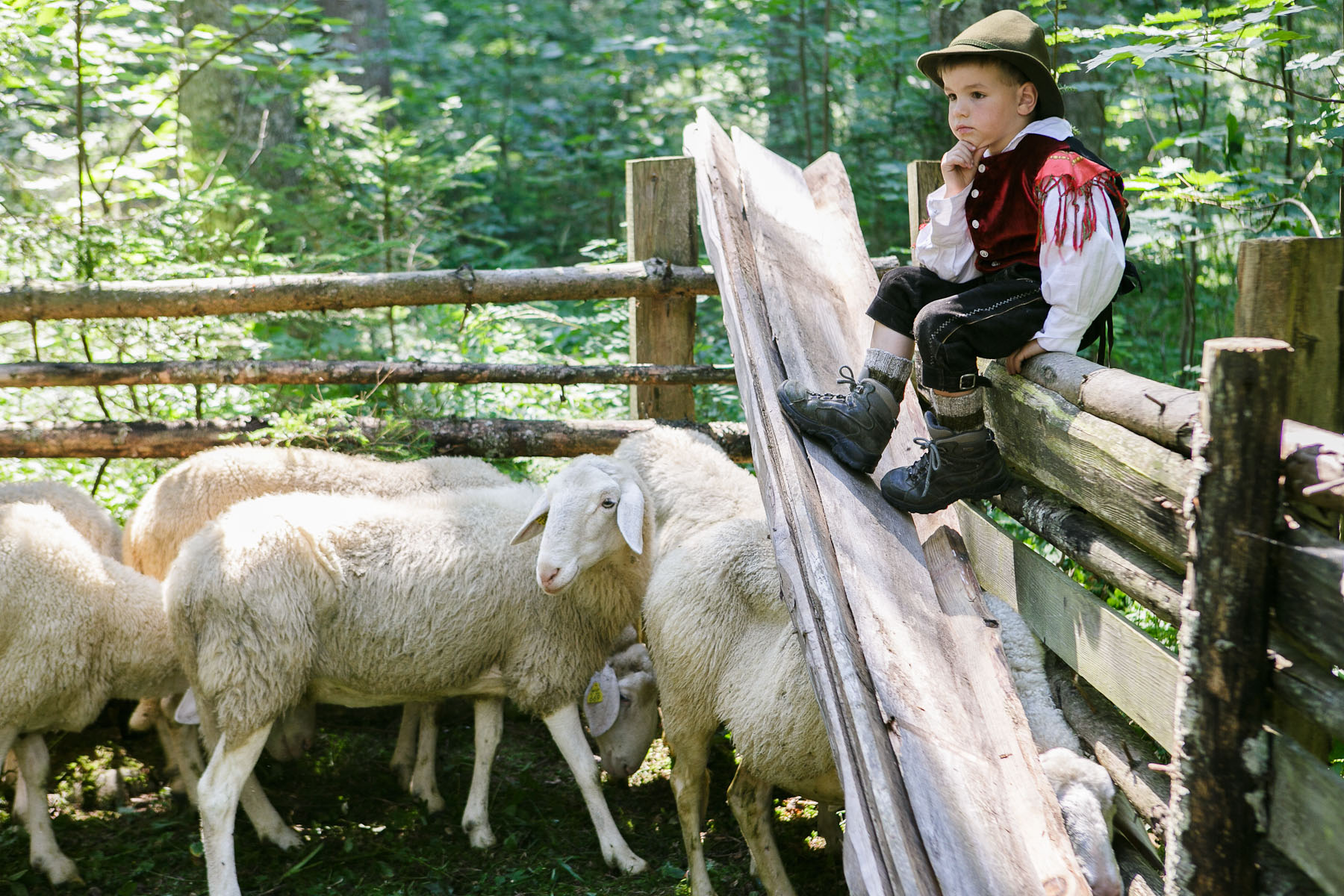 A young shepherd watches over his father\'s sheep before the 57th annual Shepherd\'s Ball in Jezersko, Slovenia.