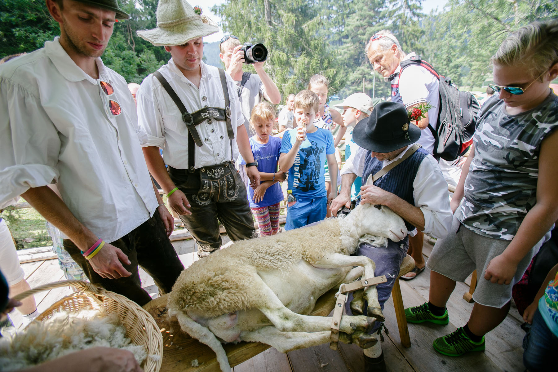 Shepherds shear a sheep during the 57th annual Shepherd\'s Ball in Jezersko, Slovenia.