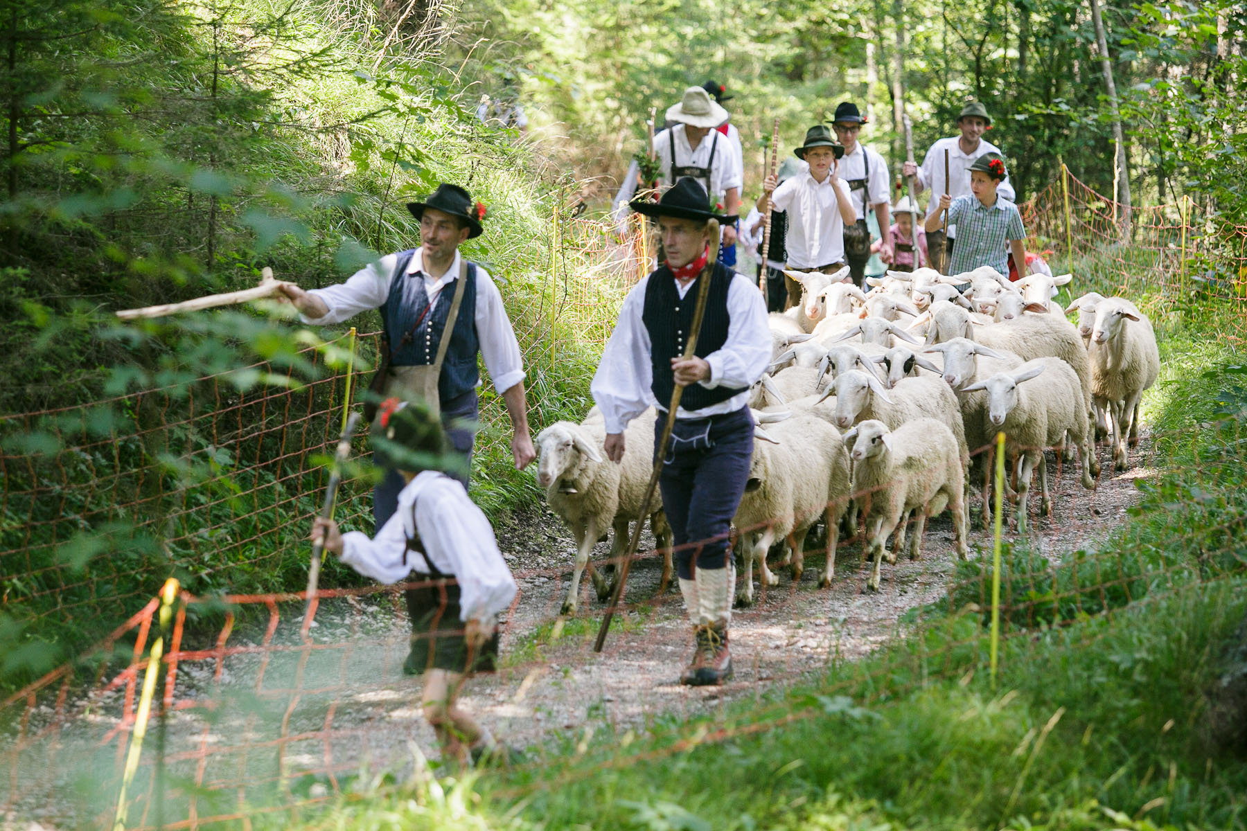Shepherds herd the sheep to the 57th annual Shepherd\'s Ball in Jezersko, Slovenia.