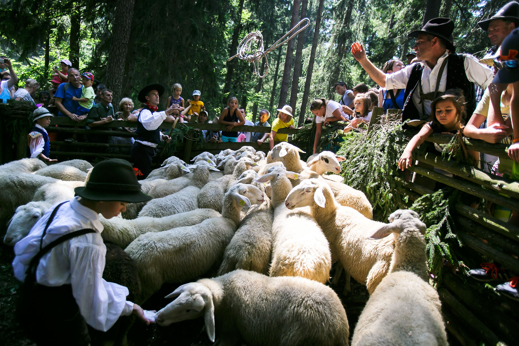 Shepherds bring the sheep to the 57th annual Shepherd\'s Ball in Jezersko, Slovenia.