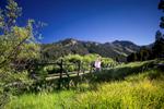 California-Destination-Weddings-napa-weddings-5