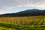 napa-event-photographer-wine-winery-17