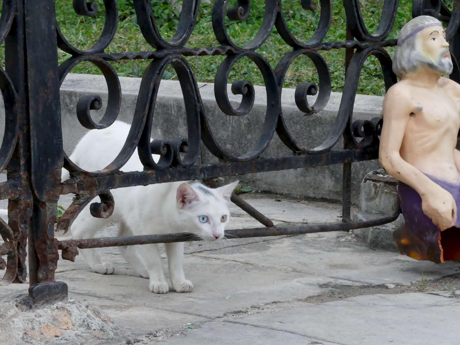 LK-Cat-finds-Jesus-Old-Havana