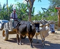LK-Mule-driver-Vinales