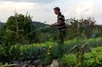 LK-Organic-farm-Vinales