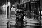 Nouvelle orléans innondations+le dome+cadavre.....