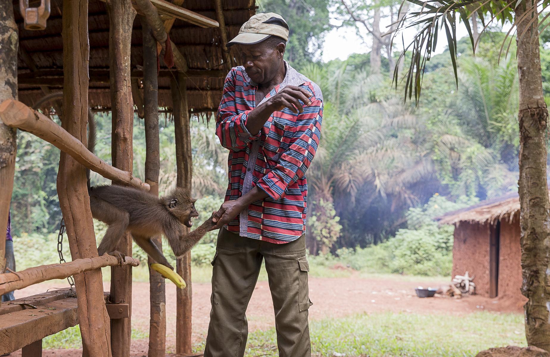 Sur la route de l\'est du Cameroun un petit singe est retenu captif depuis quatre ans pour distraire les habitants du village.