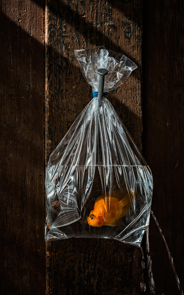 Goldfish_1200-on-large-side