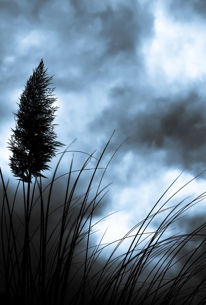 Grass-1200