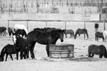 Horse-1200