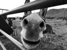 donkey-1200