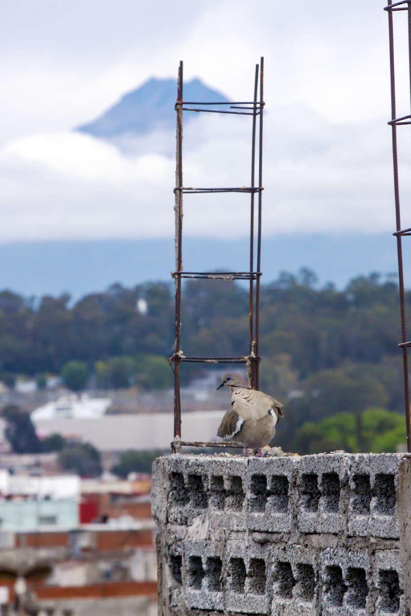 pigeon-volcano-1200