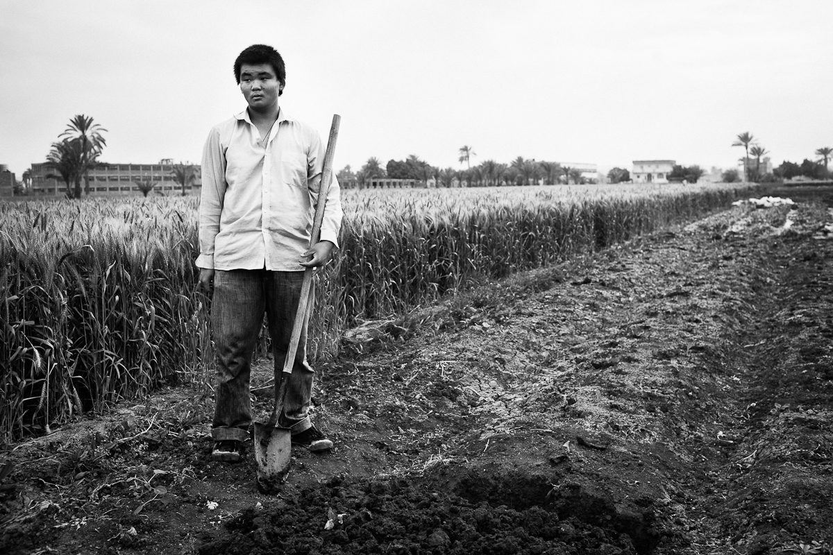 CAIRO, EGYPT - APRIL 3 : Li Ting, an illegal Chinese migrant farmer works with his family planting Chinese vegetables on April 3, 2012 in Fayoum, Egypt.