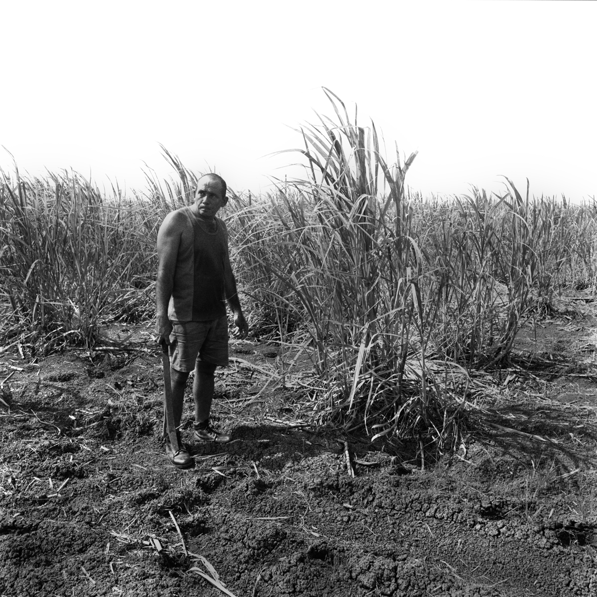 003-NS-Abrazme-Man-Cutting-Sugarcane