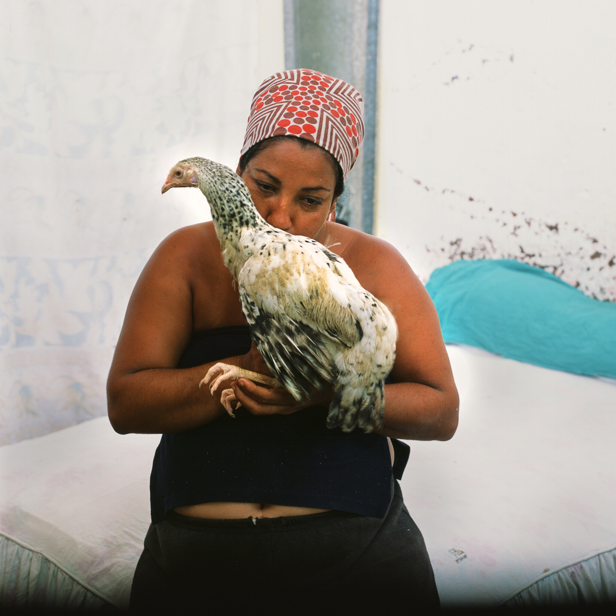 Lelani kisses her chiscken she keeps and raises in her house. It is becoming more popular among some people to have chickens as pets, which they raise for their eggs in order to supplement their diet. Eggs in Cuba can be expensive and and difficult to find at the local markets. Havana, Cuba