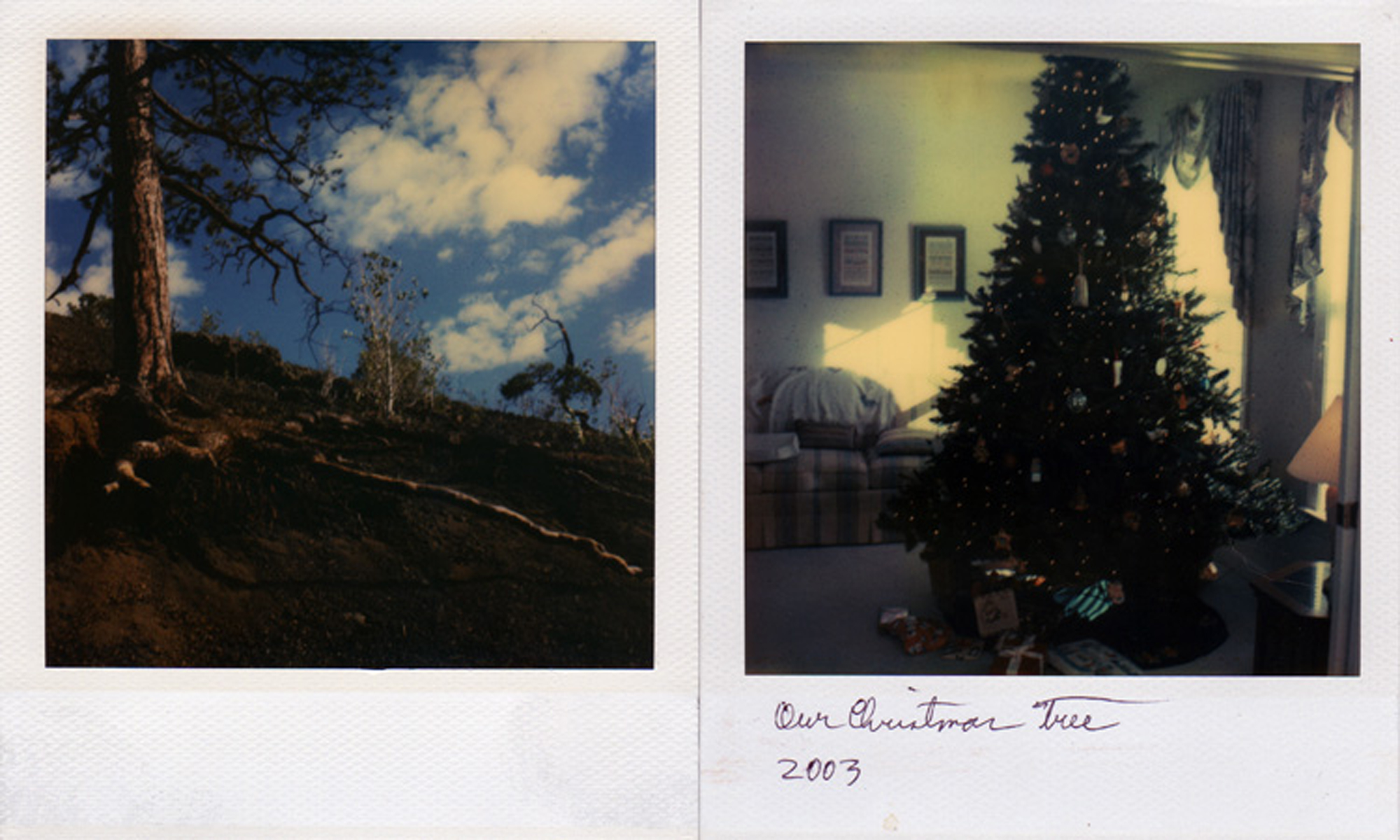 Tree (left); My father's Christmas tree, 2003 (right).