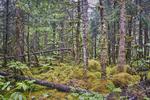 AK-Landscape-C-JPBx
