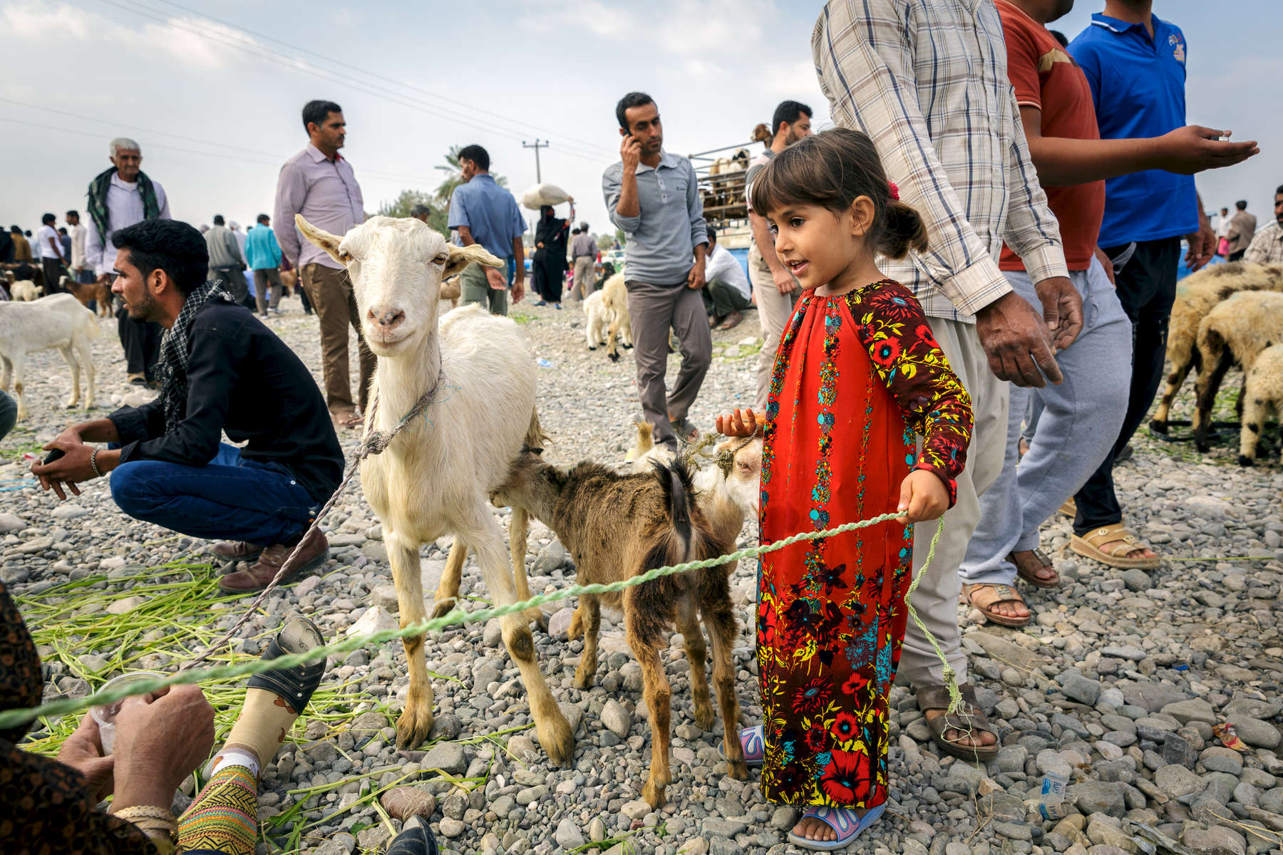 A young girl in a brilliant red outfit helping her parents with the mornings business trading livestock in the 'Panjshambe Bazar', Minab.