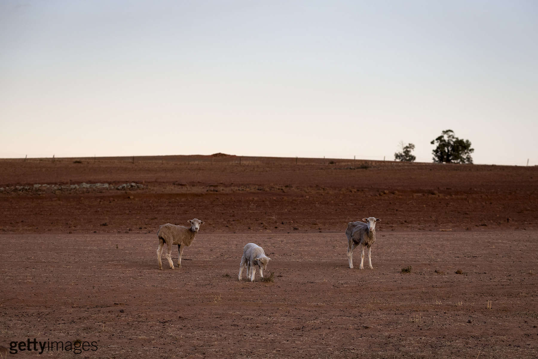 COONABARABRAN , NEW SOUTH WALES - JUNE 20:  The Jerry family farm 'Marlborough', 40 km outside Coonabarabran. The New South Wales State government recently approved an emergency drought relief package of A$600m, of which at least A$250m is allocated for low interest loans to assist eligible farm businesses to recover. The package has been welcomed, though in the words of a local farmer {quote}it barely touches the sides{quote}. Now with the real prospect of a dry El-Nino weather pattern hitting the state in Spring, the longer term outlook for rain here is dire. June 20, 2018 in Coonabarabran, Australia.  (Photo by Brook Mitchell/Getty Images)